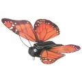 Butterfly (Motýl)